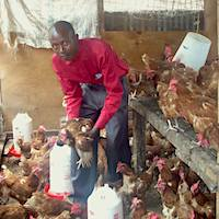 teacher Titus with the chickens